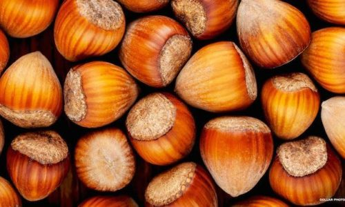 Coltivazione del nocciolo in Italia: se ne parla ai Georgofili