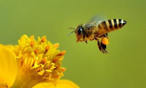 Allarme: la produzioni di api è in crollo verticale