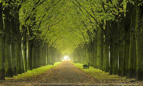 Giornata nazionale degli alberi: dieci miti da sfatare