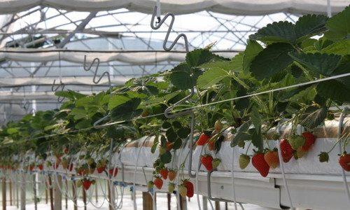 Agricoltura, da Agea 190 milioni per assicurazioni agevolate