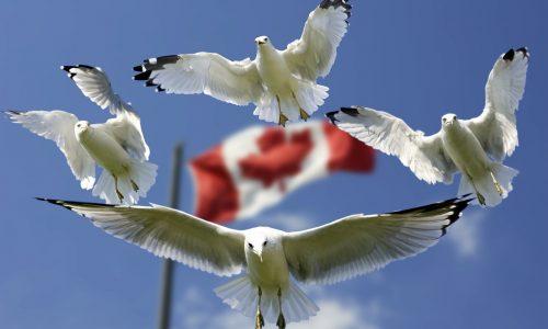 Ambasciata del Canada: premio per l'innovazione