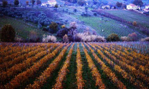 """Sannio Falanghina, chiusura della """"Città europea del vino"""""""