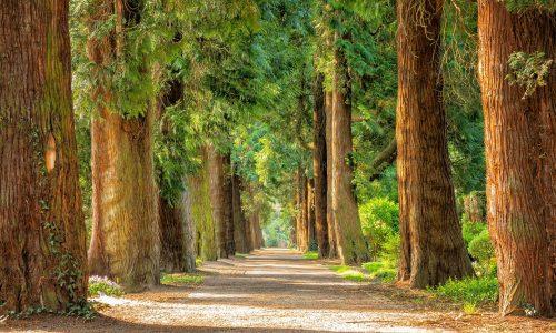 Dalla gestione sostenibile della foresta al legno come materiale da costruzione
