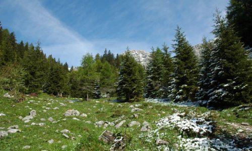 """Appello su """"Science"""": la biodiversità va protetta"""