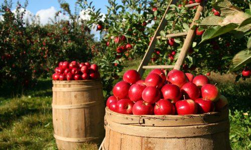 Il lavoro agricolo torna ad attirare gli italiani