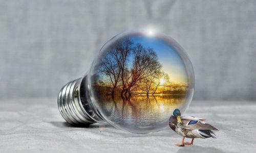 Energie rinnovabili, il Covid impatta sulla crescita già modesta del 2019