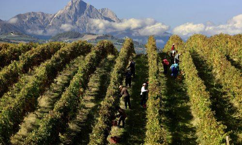 I vini d'Abruzzo puntano agli Usa e alla Cina