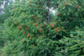 Indagando sui pro e i contro degli alberi esotici