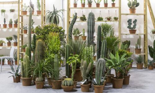 Comparto fiori e piante: il Lazio è protagonista