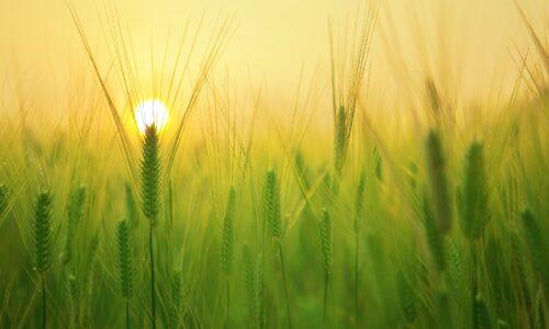 Agricoltura, convegno sugli espropri
