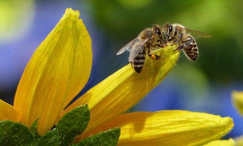 Ambiente e salute, il basilare ruolo svolto dalle api